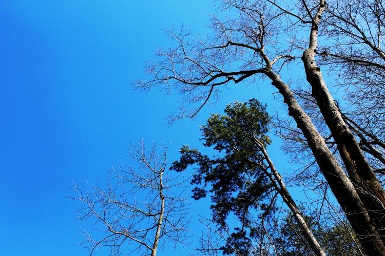 i-only-look-upwards_25358237526_o
