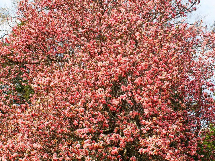 cropped-flowers-3_25738556205_o.jpg